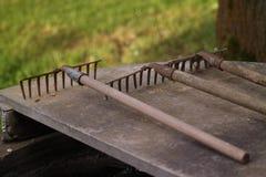 Rastrillos para el trabajo del jardín Imagen de archivo