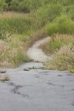 Rastro agrietado del cemento que lleva en Forest Preserve Prairie Fotografía de archivo