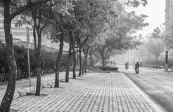 Rastro al aire libre del paseo del parque de la naturaleza Imágenes de archivo libres de regalías