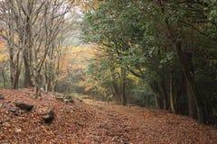Rastro al bosque Fotos de archivo libres de regalías