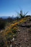 Rastro al pico de Wasson Fotografía de archivo libre de regalías