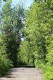 Rastro ancho a través del bosque enorme Fotografía de archivo