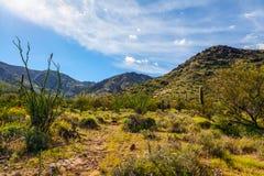 Rastro Arizona de Harquahala Foto de archivo