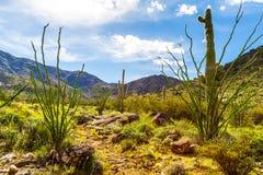 Rastro Arizona de Harquahala Imagenes de archivo