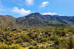 Rastro Arizona de Harquahala Imágenes de archivo libres de regalías