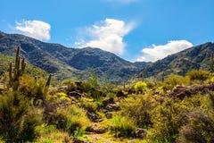 Rastro Arizona de Harquahala Imagen de archivo