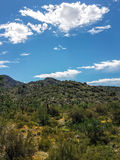 Rastro Arizona de Harquahala Foto de archivo libre de regalías