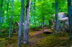 Rastro cubierto claro de los árboles del musgo del bosque Imagen de archivo libre de regalías
