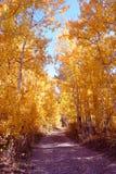 Rastro de Aspen Imagenes de archivo
