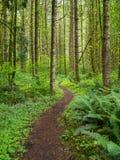 Rastro de enrrollamiento sin embargo un bosque verde imagen de archivo