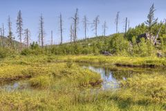 Rastro de Gunflint en el bosque del Estado superior, Minnesota fotos de archivo