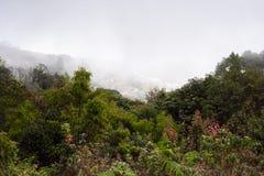 Rastro de Kew Mae Pan Nature Trail Trekking que lleva a través de selva Imagen de archivo