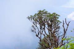 Rastro de Kew Mae Pan Nature Trail Trekking que lleva a través de selva Fotos de archivo libres de regalías