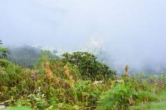 Rastro de Kew Mae Pan Nature Trail Trekking que lleva a través de selva Imagenes de archivo