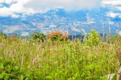 Rastro de Kew Mae Pan Nature Trail Trekking que lleva a través de selva Foto de archivo libre de regalías