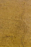 Rastro de la arena Fotos de archivo libres de regalías