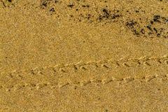 Rastro de la arena Imágenes de archivo libres de regalías