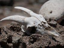 Rastro de la bahía de la primavera en Saba Fotografía de archivo