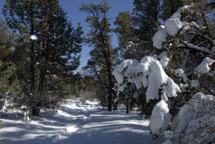 Rastro de la cresta del puma el San Bernardino, montañas. Fotografía de archivo