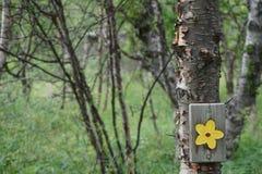 Rastro de la flor de Abisko Imagenes de archivo