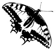 Rastro de la mariposa imagen de archivo