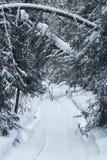 Rastro de la moto de nieve a través de un bosque Fotos de archivo