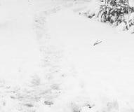Rastro de la nieve Imágenes de archivo libres de regalías