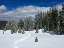 Rastro de la raqueta del invierno en Montgomery Pass en Colorado Fotografía de archivo libre de regalías