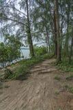 Rastro de la selva cerca del agua imagen de archivo