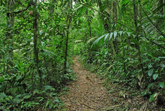 Rastro de la selva, Costa Rica Imagen de archivo