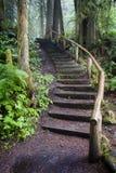 Rastro de la selva tropical Fotos de archivo
