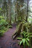 Rastro de la selva tropical Fotografía de archivo