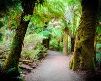 Rastro de la selva tropical del resto de Maits en el gran camino del océano, Australia Fotografía de archivo libre de regalías