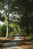 Rastro de la senda para peatones del enrollamiento. Foto de archivo