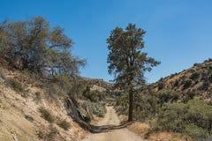 Rastro de la suciedad en barranco del desierto de California Imágenes de archivo libres de regalías