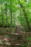 Rastro de la suciedad a través del bosque de hojas caducas Fotografía de archivo libre de regalías