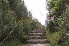 Rastro de la trayectoria en la isla de Madeira Fotografía de archivo