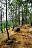 Rastro de los acantilados de los pinos Foto de archivo libre de regalías