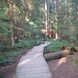 Rastro de madera en declive en el parque regional del río de Capilano foto de archivo