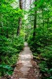 Rastro de madera a través del bosque Imagenes de archivo