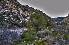 Rastro de montaña Fotografía de archivo