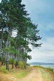 Rastro de montaña con el árbol por el lago Foto de archivo