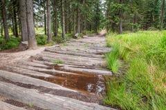 Rastro de montaña de madera en el bosque Fotografía de archivo