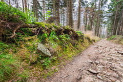 Rastro de montaña en el bosque Imagen de archivo libre de regalías