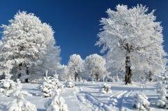 Rastro de montaña entre los árboles nevosos Imágenes de archivo libres de regalías