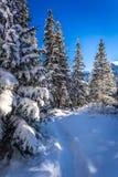 Rastro de montaña nevoso del invierno Imagen de archivo libre de regalías