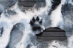 Rastro de pata del perro en la nieve; impresión del pie animal Imagenes de archivo