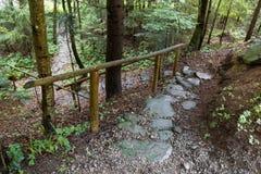 Rastro de piedra del bosque en el bosque de la montaña imágenes de archivo libres de regalías