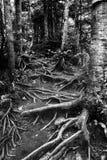 Rastro de raíces Foto de archivo libre de regalías