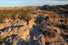 Rastro de Rio Grande Village Campground Nature por la mañana fotografía de archivo